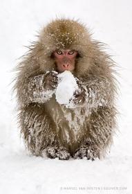 """Snow play"""