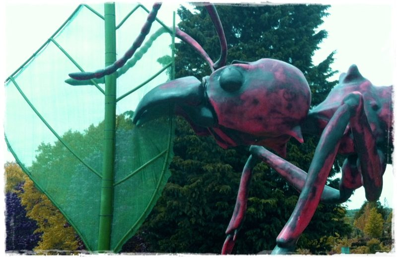 """leafcutter ant"""