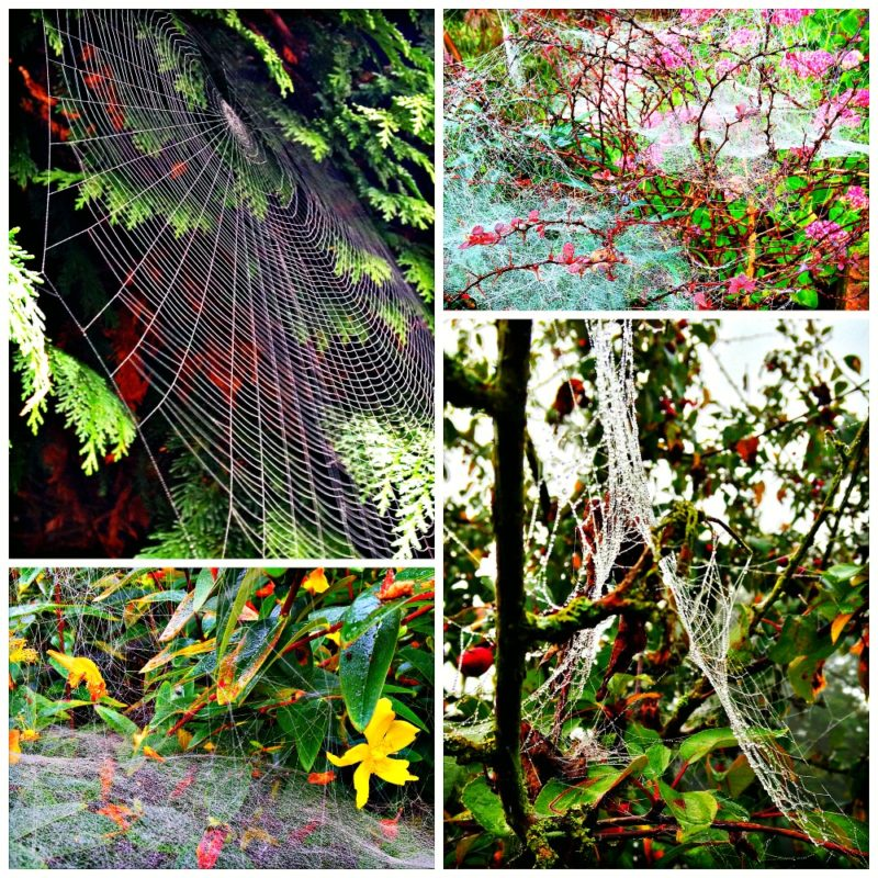Beautiful spider webs on a misty morning