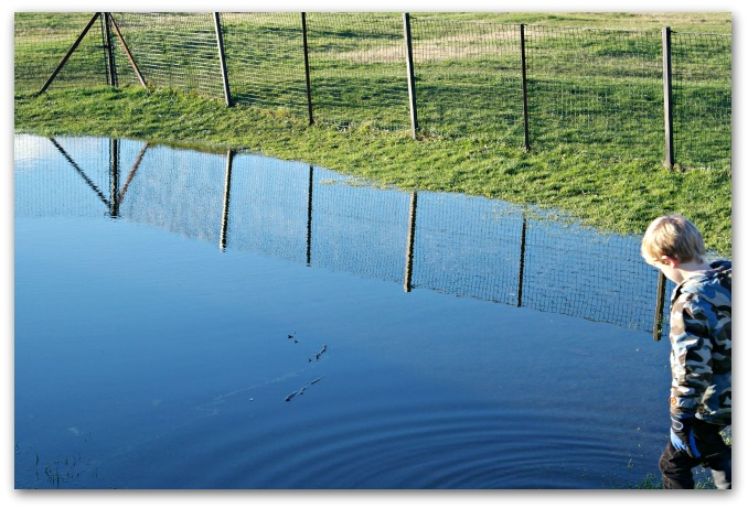 Experimenting with light - I was focused on the reflection of the fence, hadn't noticed the ripple from The Bug