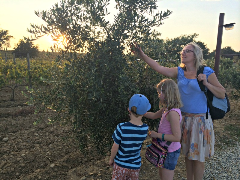 Catalan food - the beautiful olive groves at La Vinyeta on the Costa Brava