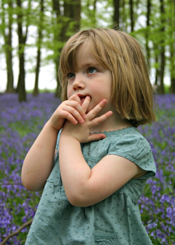 Where to see Bluebells in Hertfordshire
