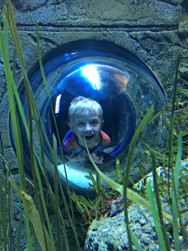 Kids love the fun things to do at the London aquarium