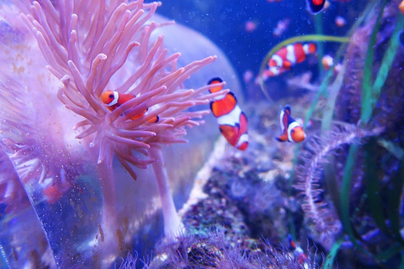 Days Out: Sea Life Birmingham with Teenagers