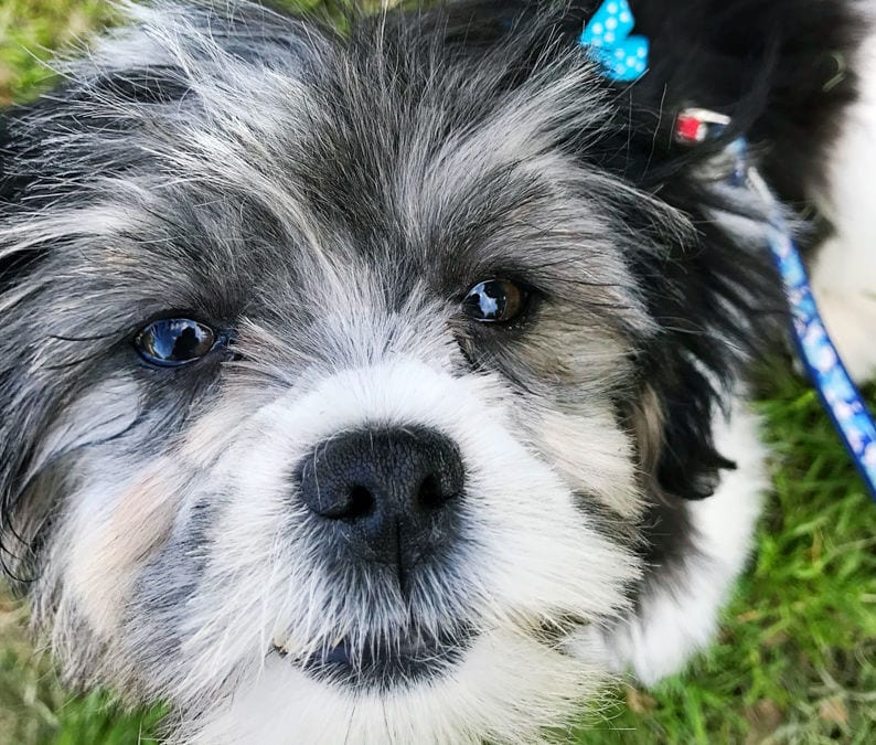 Why a Puppy is Exactly Like a New Baby